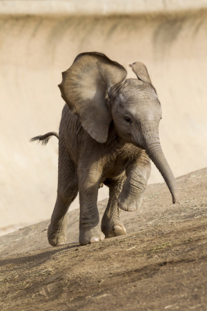 photo by san diego zoo